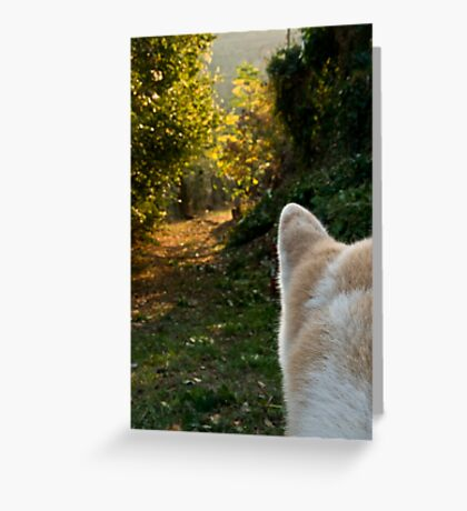 The path and the onlooker Greeting Card