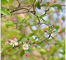Springtime Pleasure by SabineA