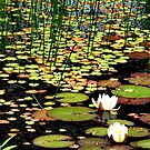 Lily Pad Pond by AnnDixon