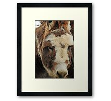I'm Under all this Fur! Framed Print