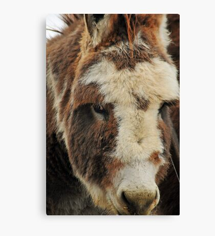 I'm Under all this Fur! Canvas Print