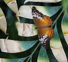 Painted Lady by Karen E Camilleri