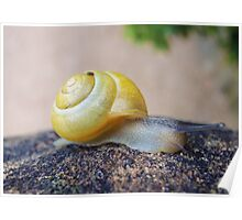 Yellow Snails Bring Joy  Poster