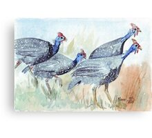 Guinea fowl in my garden Canvas Print