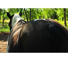 Yes, I'm half Percheron, but I don't want to talk about it! Photographic Print