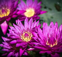 Water Flowers by -LGM-