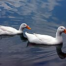 *DAISY and AFLAC* by Van Coleman