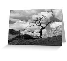 The Burmis Tree Greeting Card