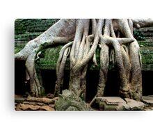Ta Prohm Temple - Angkor, Cambodia. Canvas Print