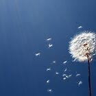 Make a Wish! by Matt Rhodes