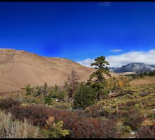 Sand Dunes National Park by johnxe22