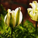Green Tulips by LudaNayvelt