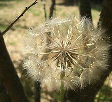 Seed Globe Tree by wingedturtle