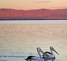 Magic Moments - Pelican Sunset by Georgie Sharp