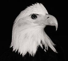 Handsome Bird by David Friederich