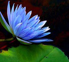 Lavender Blue by Rosalie Scanlon