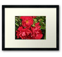 Grandma's Roses Framed Print
