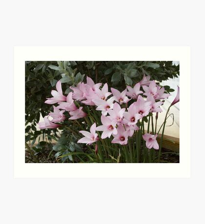 Singing Lilies Art Print