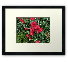 Grandma'a Roses 2 Framed Print