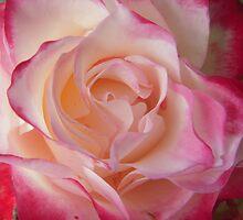 Glorious by Tama Blough