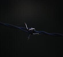 Barbed by AylaM