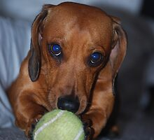 Minature sausage dog by TaylorV