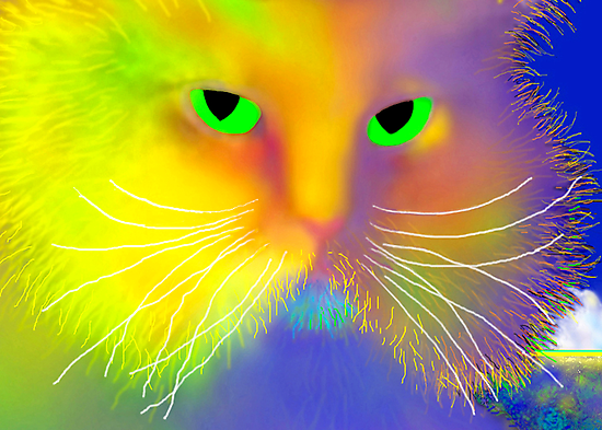 Boo Cat by luvapples downunder/ Norval Arbogast