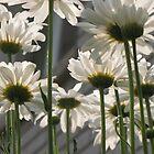 Daisy Umbrella by nikspix