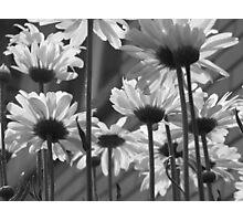 Daisy Umbrella black and white Photographic Print