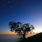 The Southern Cross. by Donovan Wilson