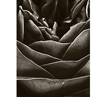 Dark Rose Photographic Print