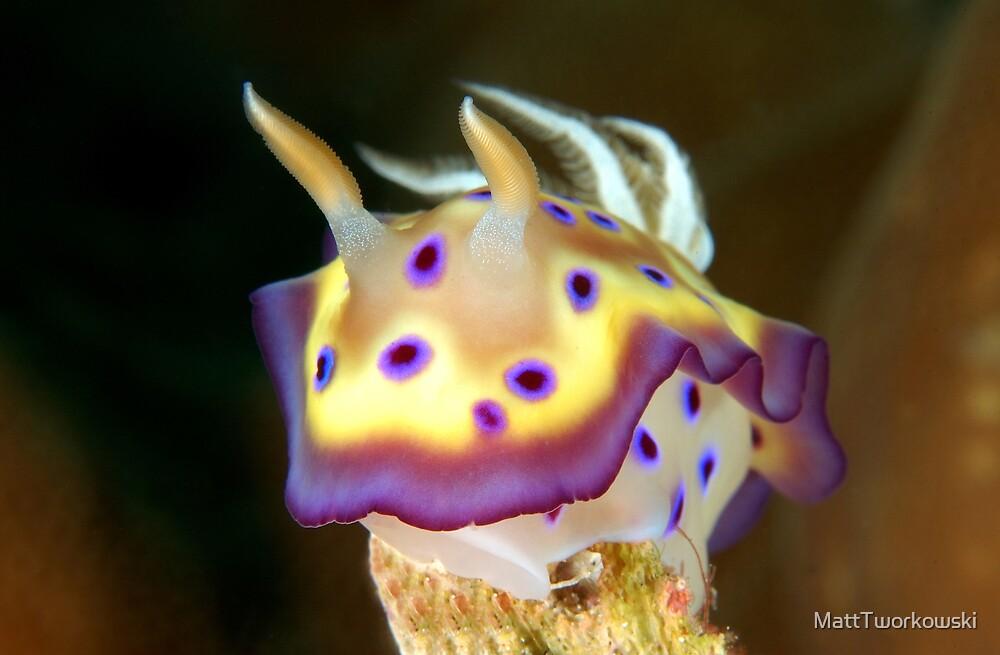Kunes Chromodoris (Nudibranch) by MattTworkowski