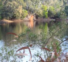 The lake, Belair National Park, South Australia. Sticker
