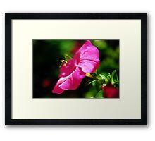 Hoverfly & Petunia Framed Print