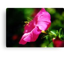 Hoverfly & Petunia Canvas Print