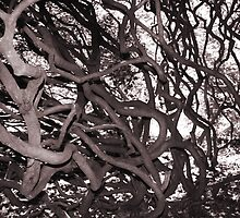 Roots by shortarcasart
