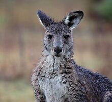 Kangaroo2 by Adam Wightman