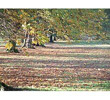 Autumnal Yorkshire Photographic Print