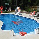 Tide pool by Susan Littlefield