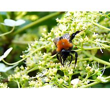Busy Being Bee Photographic Print