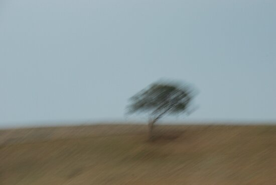 Sky.Tree.Hill - New South Wales by mellychan