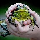 a Big bullfrog... by Laurie Minor
