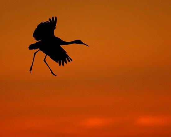 Walking on Air by Sheri L Gladish