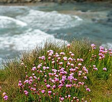 Sea Thrift at the Sea by Nick Jenkins