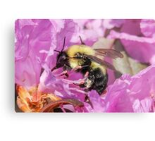Bee Collecting Pollen Metal Print