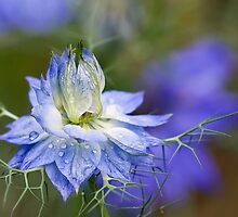 Tangled Up In Blue by Margaret Barry