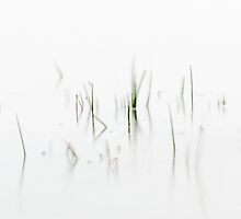 Lake Reeds In Motion by Dane Strom