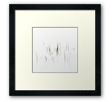 Lake Reeds In Motion Framed Print
