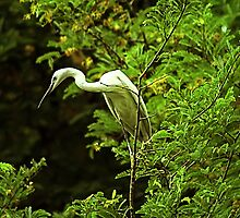 Egret's mood #1 by Prasad