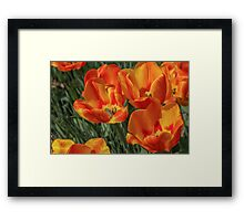 Beautiful Tulips Framed Print